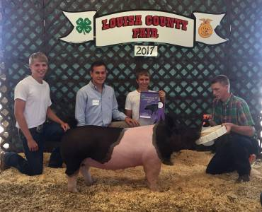 Grand Commercial Gilt 17 Louisa Co