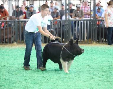 Res Hamp Gilt ISF 4H