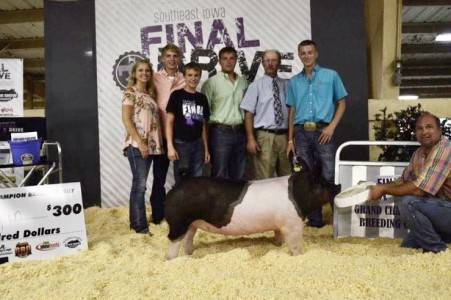 Final Drive Champion Breeding Gilt