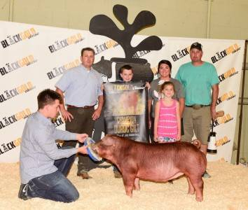 Champ Duroc Black & Gold