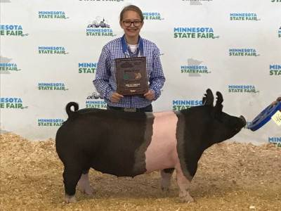 Champion Market Gilt
