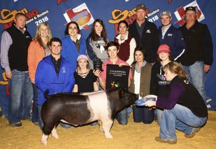Champion Hampshire Barrow 2018 San Antonio Stock Show