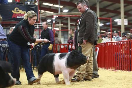 Reserve Champion Crossbred Barrow 2018 San Antonio Stock Show