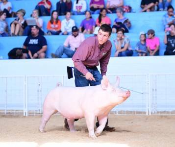 2017 Reserve Champion York Barrow State Fair of Texas