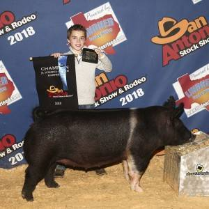 Grand Champion Hampshire GIlt  2018 San Antonio Stock Show Breeding Gilt Show