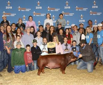 Reserve Grand Duroc Barrow 2018 Rodeo Houston
