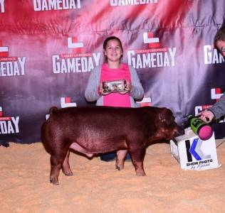 Champion Duroc Barrow & 4th Overall 2017 Kings of the Hill Futurity