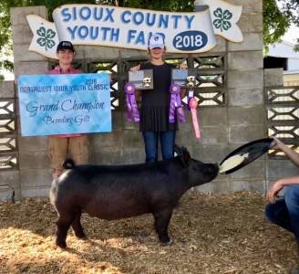 Grand Champion Breeding Gilt 2018 Sioux County Fair