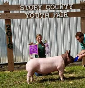 2016 Reserve Grand Market Hog, Story County Fair