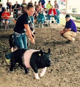 2016 Grand Champion Barrow, Sac County Fair