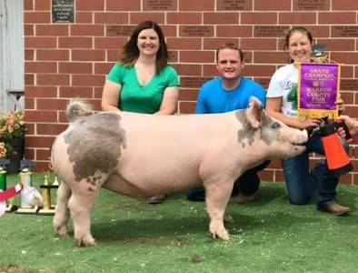 2016 Grand Champion Market Hog, Warren County Fair