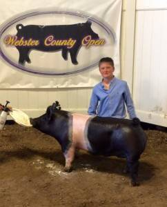 2016 Reserve Grand Champion Barrow, Webster County Open Show