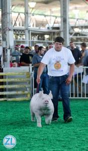 2015 Reserve Grand Champion Purebred Barrow