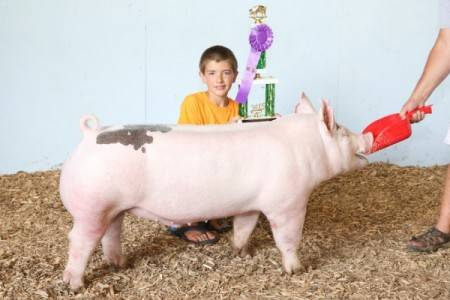 2015 Grand Champion Overall Market Hog