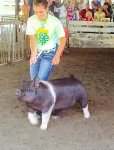 2015 Grand Champion Barrow
