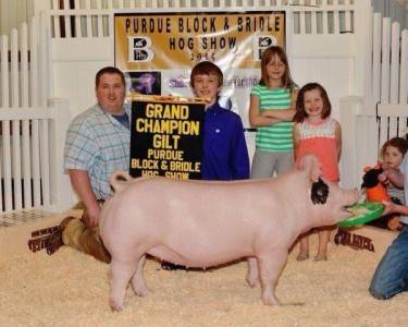 2015 Multiple time Grand Champion Gilt