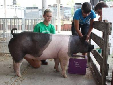 2012 Benton County Fair