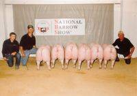 2009 National Barrow Show - Austin, MN