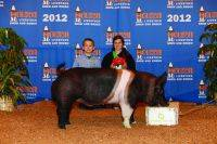 Bred by: Shannon Barbie/Todd Stevenson Show location: 2012 Houston Stock Show Placing: Class Winning Heavy Weight Division Hampshire