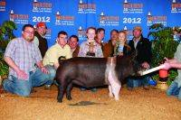 2012 Hampshire Houston Livestock Show